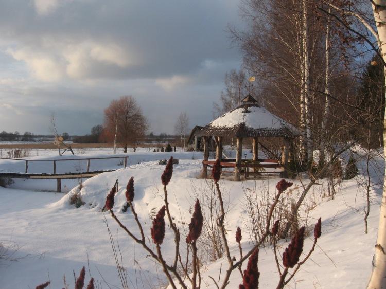 Lapene ziemas ainavā