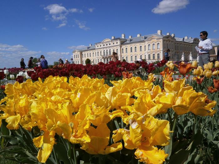 Ziedošas tulpes Rundāles pils parkā