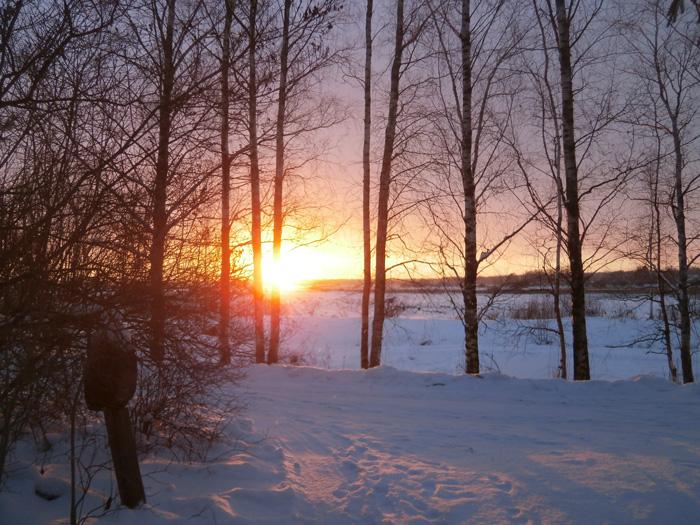 Ziemas saulriets