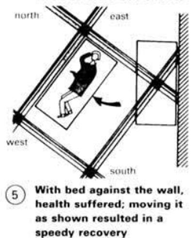Veselīga guļvieta āderu tīklā, Neiferts