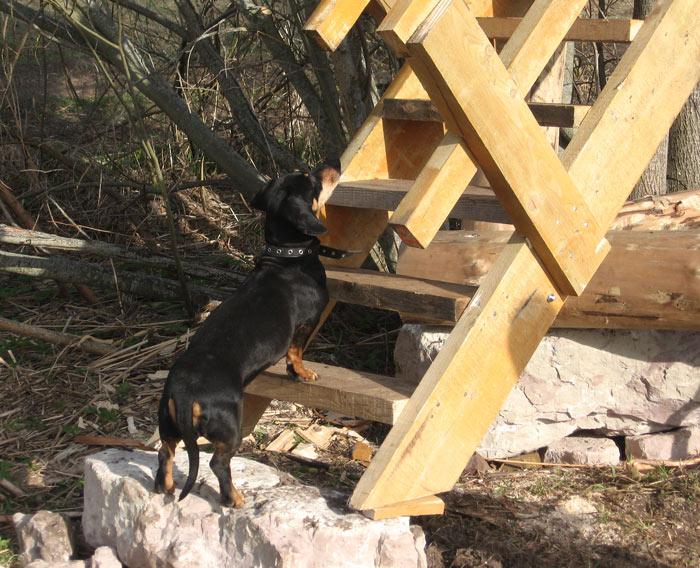 Suns pie kāpnēm
